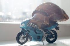 Een slak berijdt een het rennen motorfiets, concept snelheid en succes, selectieve nadruk royalty-vrije stock fotografie