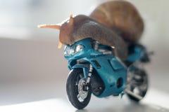 Een slak berijdt een het rennen motorfiets, concept snelheid en succes, selectieve nadruk royalty-vrije stock foto