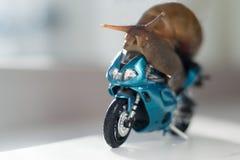 Een slak berijdt een het rennen motorfiets, concept snelheid en succes, selectieve nadruk stock afbeeldingen