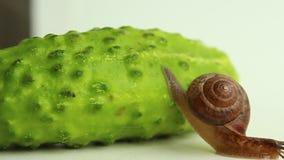 Een slak daalt van de komkommer stock videobeelden