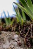 Een slak die langzaam kruipen Royalty-vrije Stock Afbeeldingen