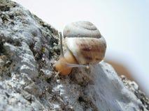 Een slak die onderaan de muur gaan Stock Fotografie