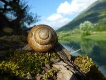 Een slak op een boom met mos Montenegro ` s bergen Royalty-vrije Stock Foto