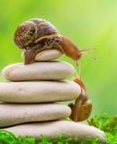 Een slak op de bovenkant van een stapel van kiezelstenen moedigt zijn partner aan royalty-vrije stock afbeeldingen