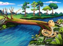 Een slang bij riverbank stock illustratie