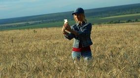Een slanke vrouw loopt op een tarwegebied en neemt beelden van aartjes op haar telefoon op een Zonnige de zomerdag stock footage