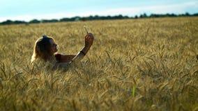 Een slanke vrouw loopt op een tarwegebied en neemt beelden van aartjes op haar telefoon op een Zonnige de zomerdag stock videobeelden