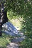 Een sleep door het bos royalty-vrije stock foto