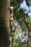 Een slinger van rapans Stock Fotografie