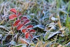 Een smaak van de winter Royalty-vrije Stock Fotografie