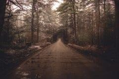 Een smalle weg in een bos stock fotografie