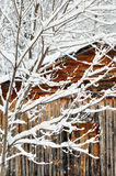 Een sneeuw behandelde boom tegen een houten schuur. Royalty-vrije Stock Foto's