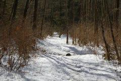 Een sneeuw behandelde wandelingssleep in het hout Royalty-vrije Stock Foto's