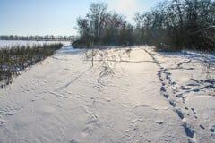 Een sneeuw de winter ijzige ochtend Stock Afbeeldingen