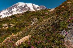 Een sneeuw dekte berg af, opzet Regenachtiger, in de lentetijd met een gebied van de lentewildflowers in de voorgrond stock afbeeldingen