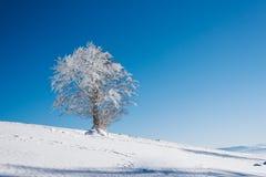 Een sneeuwhelling met boom bovenop de berg met een duidelijke blauwe hemel op een zonnige dag royalty-vrije stock afbeeldingen