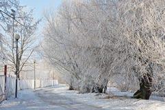 Een sneeuwweg met bomen en een omheining stock fotografie