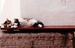 Een snel dutje, in Patmos stock foto