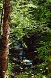 Een snelle bergrivier op de achtergrond van bomen, het concept het wild Royalty-vrije Stock Afbeeldingen