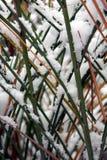 Een snow-covered gras Royalty-vrije Stock Afbeelding