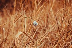 Een solitaire slak die op een grassprietje hangen Royalty-vrije Stock Afbeelding