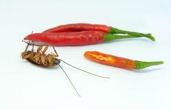 Een Spaanse peper kan kakkerlakken achtervolgen, kakkerlakkenspaanse peper op isolat omhoog sluiten stock afbeeldingen