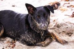Een speels puppy ligt op het behandelde strand, in zand Royalty-vrije Stock Foto
