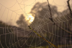 Een spiderweb tegen een dageraadhemel stock afbeelding