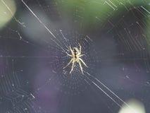 Een spin die een Web spinnen royalty-vrije stock fotografie