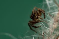 Een Spin loopt op het witte bont van gras stock afbeeldingen