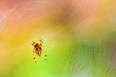 Een spin op een spiderweb in de wildernis royalty-vrije stock afbeelding