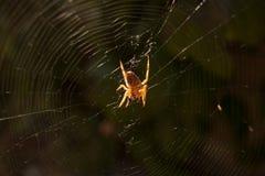 Een spinachtige zit in zijn leger stock fotografie