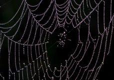 Een spinneweb Stock Afbeelding