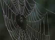 Een spinneweb Royalty-vrije Stock Fotografie