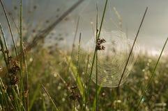 Een spinneweb met wat dauw vroeg in de ochtend met de zonstralen Royalty-vrije Stock Foto's