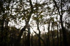 Een Spinneweb wordt opgeschort tussen Twee Bomen in Jester Park, Iowa royalty-vrije stock afbeeldingen