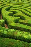 Een spiraalvormig het verwarren haag spiraalvormig labyrint Stock Afbeeldingen