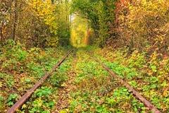 Een spoorweg in de de herfst bos Beroemde die Tunnel van liefde door bomen wordt gevormd Klevan, Rivnenska obl ukraine Royalty-vrije Stock Foto's