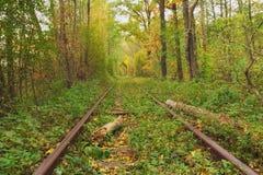 Een spoorweg in de de herfst bos Beroemde die Tunnel van liefde door bomen wordt gevormd Klevan, Rivnenska obl ukraine Stock Foto's