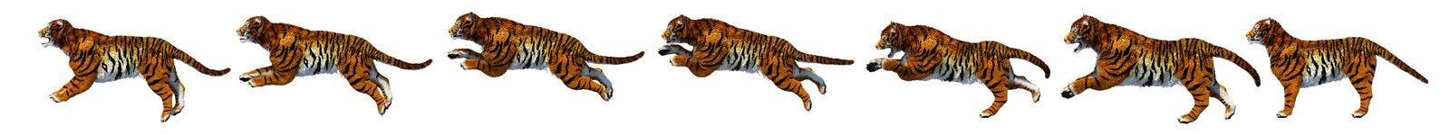 Een springende tijgergrens royalty-vrije stock foto's