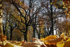 Een stadspark in de herfst Royalty-vrije Stock Afbeeldingen