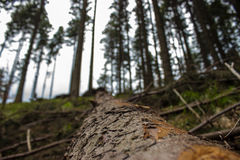 Een stam van boom Stock Foto