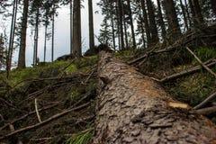 Een stam van boom Stock Afbeelding