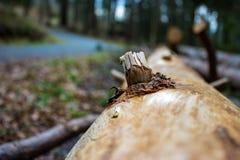 Een stam van boom Stock Fotografie