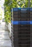 Een stapel dozen in de serre. Stock Fotografie