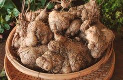 Een stapel het kruid van van Dioscoreaceae (Kleinere yam) Royalty-vrije Stock Afbeelding