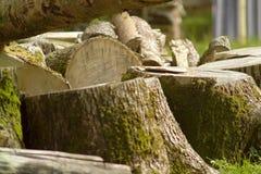 Een stapel van brandhout royalty-vrije stock foto's