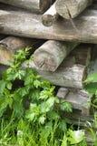 Een stapel van brandhout Royalty-vrije Stock Fotografie