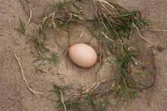 een stapel van bruine eieren in een nest op een zandachtergrond, Veel eieren Royalty-vrije Stock Fotografie