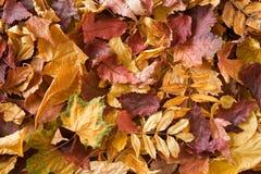 Een stapel van droge bladeren. Royalty-vrije Stock Fotografie